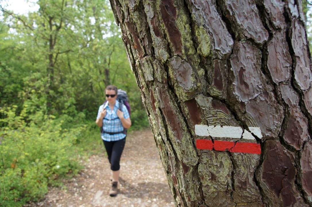 balise de Gr sur le tronc d'un arbre avec un randonneur en arrière-plan