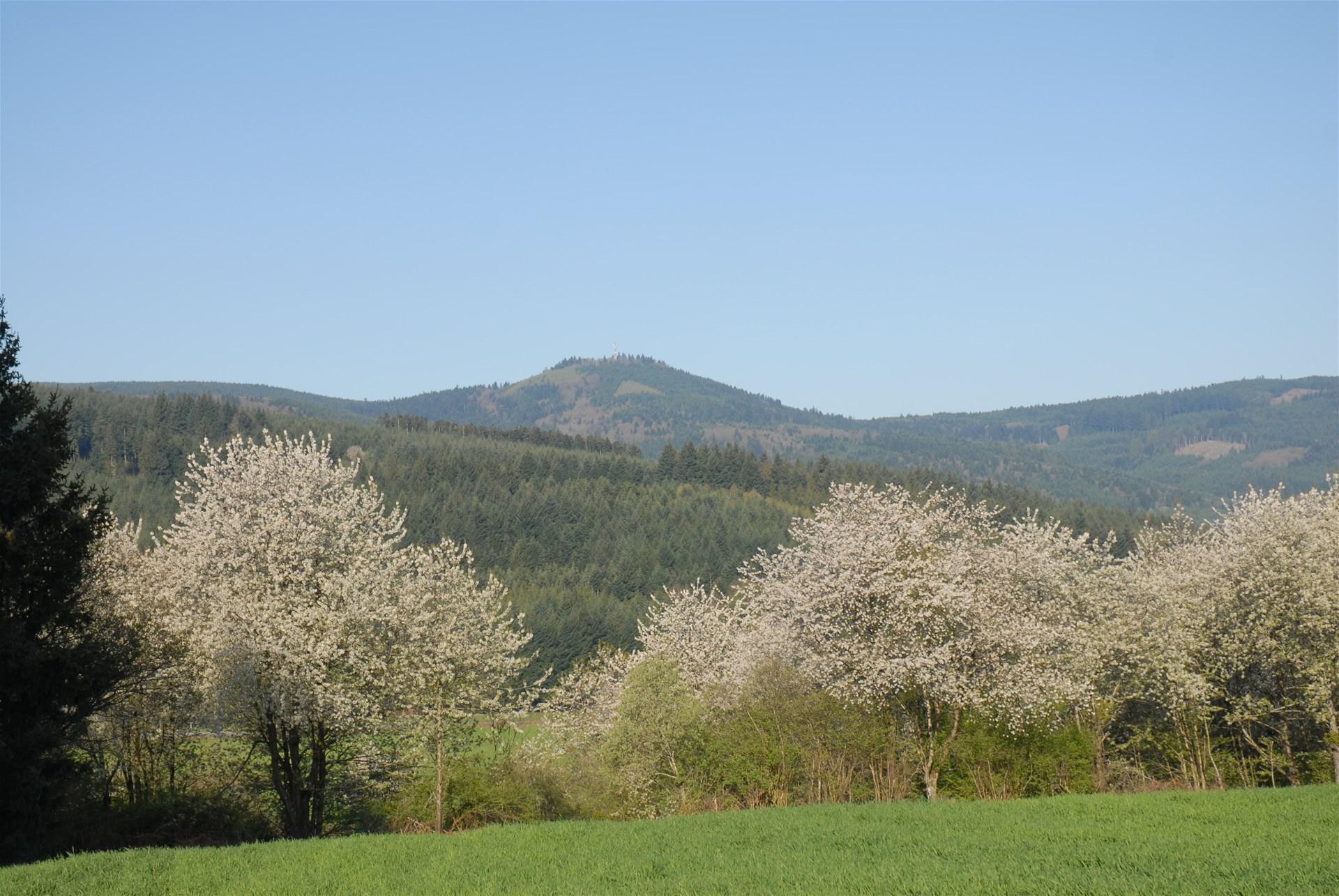 photo du Mont St Rigaud
