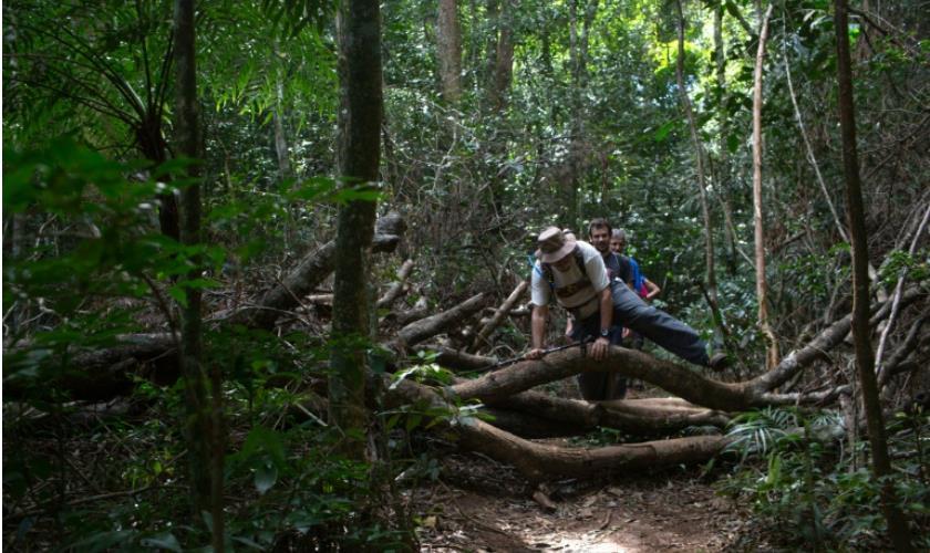 Un sentier pour protéger la forêt atlantique du Brésil